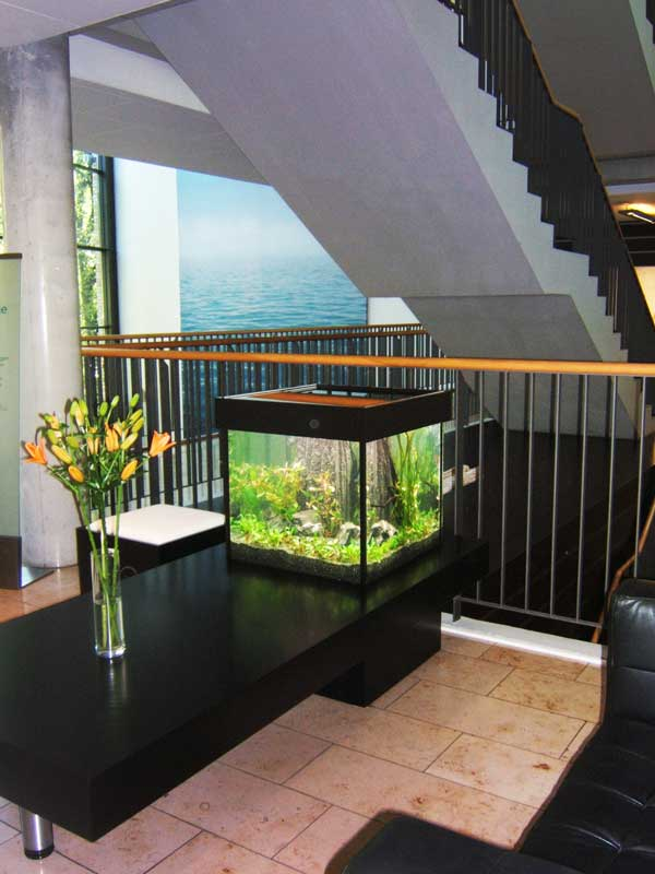 Aquarium Design ›coffee table‹
