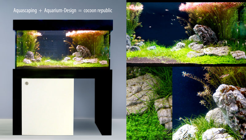 Aquascaping und Aquarium Design ist cocoon republic
