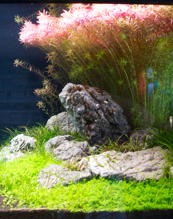 Aquascaping und Aquarium Design