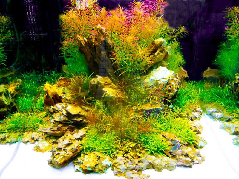 Aquascaping mit Aquariummöbel cubus // big